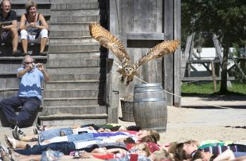 Knights and birds of prey
